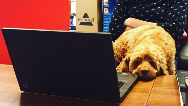 Take your dog to work (every) day at BISSELL