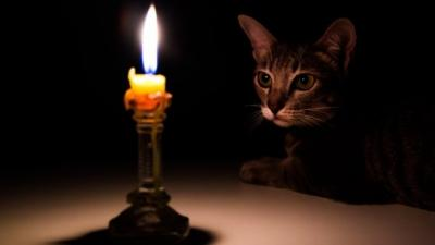 Top fire safety tips for pets and people