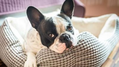 Fascinating facts about your fur-baby!